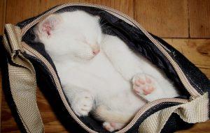cicás táska